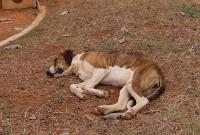 Abandonados pelos donos, Cães de Rua divide