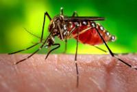 Alerta vermelho: Dengue chega a São Gotardo